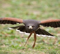 鷹の駆除イメージ